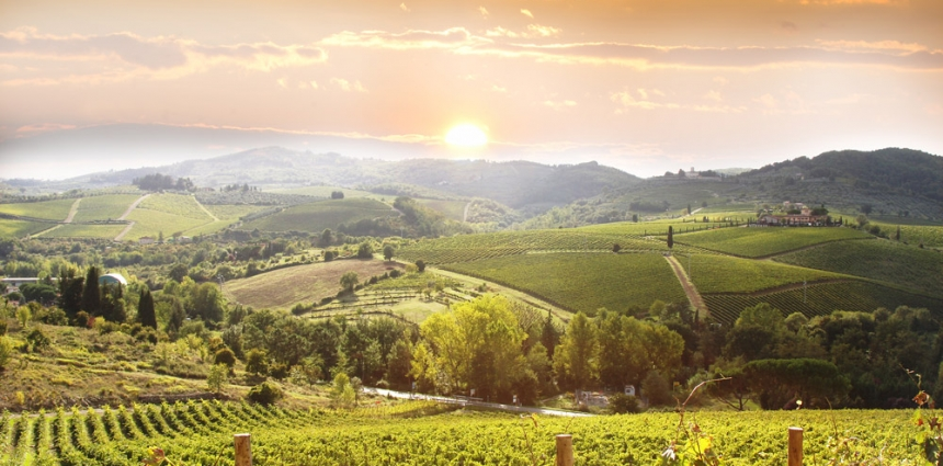 Tuscany-Vineyard-Italy-Europe-Chianti
