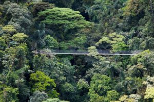 Puente-Colgantes-Arenal-Hanging-Bridges-Nature-Walk-Tour